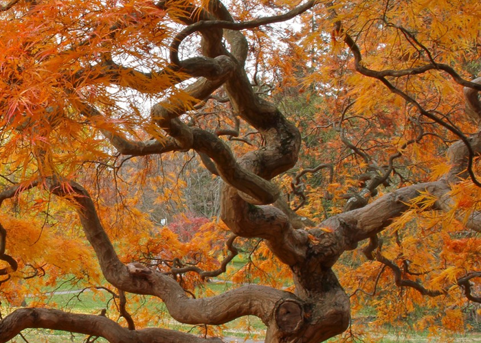 Twisted tree