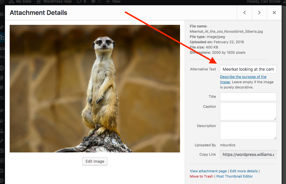 Screenshot showing image information screen with alt text field emphasized